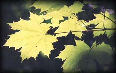 Hojas la voz de bariloche for Como se llaman los arboles que no pierden sus hojas
